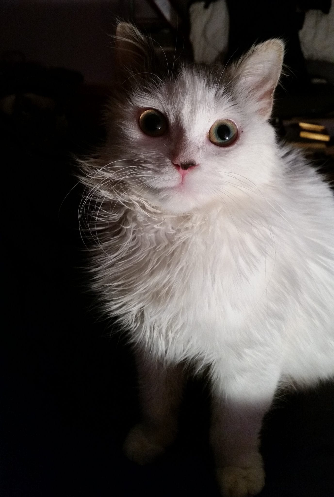 cute kittten